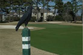 Tee It Up Grand Strand – What to Expect When Arriving at Crow Creek Golf Club